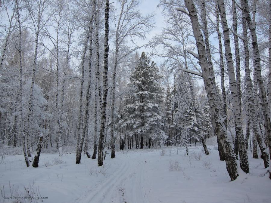 снег 04.jpg