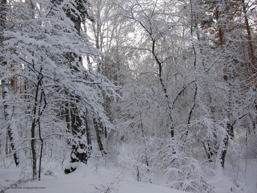 снег 05.jpg