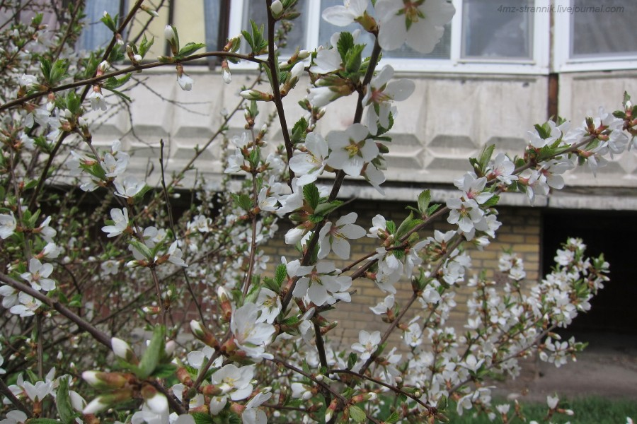 весна 01.jpg