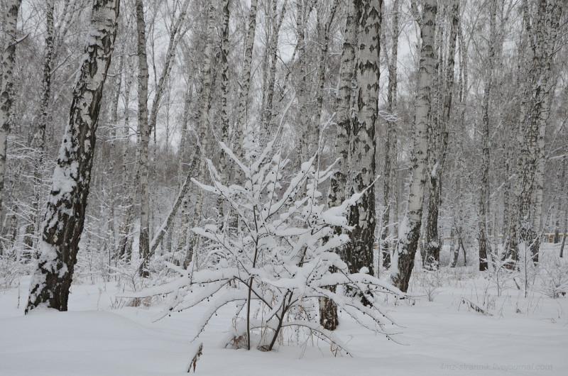 зима пришла 01.jpg