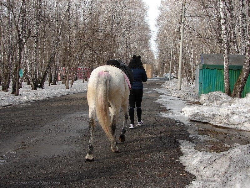 лошадка 02.jpg
