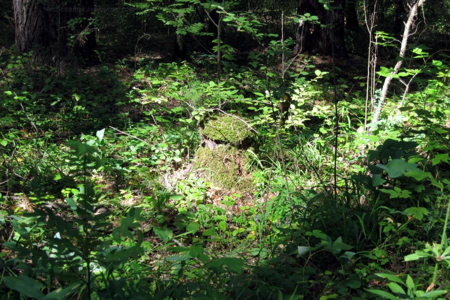 лесовичок.jpg