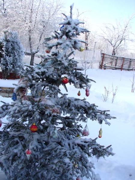 елка на клумбе