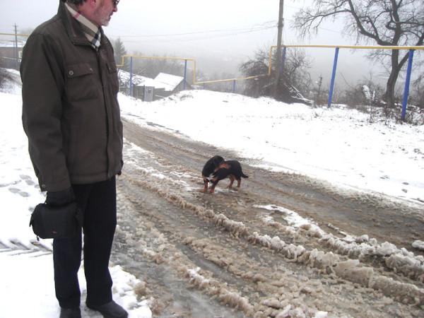 в переулке каждая собака