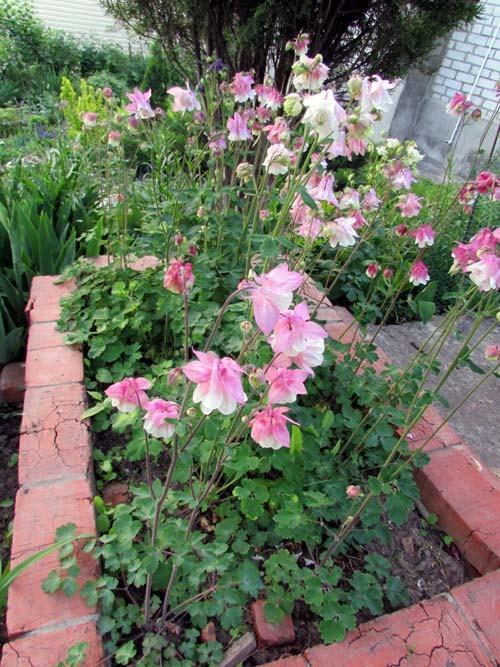 бело розовые 1