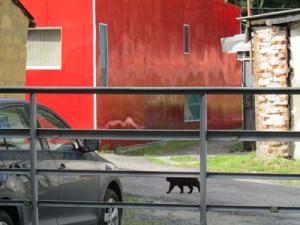 кошка Изображение 041