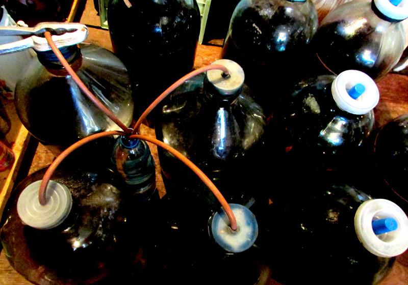 будет вино 2 IMG_3793