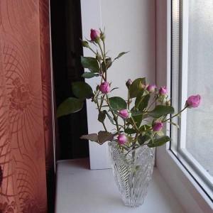 последние розы 1