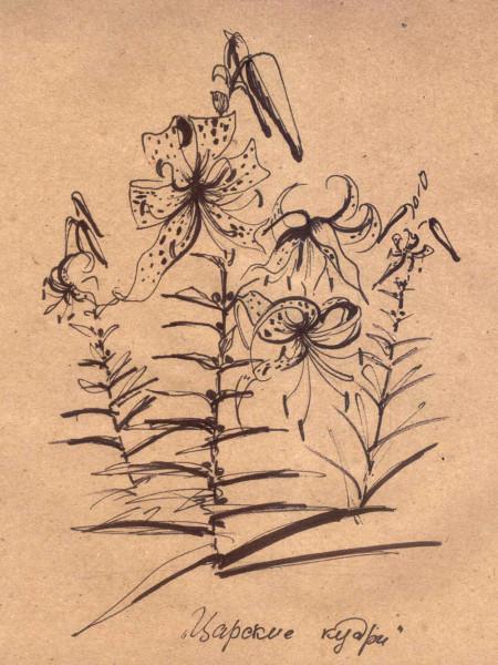 лилии Царские кудри 2