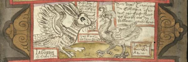 фрагмент Адриана заяц