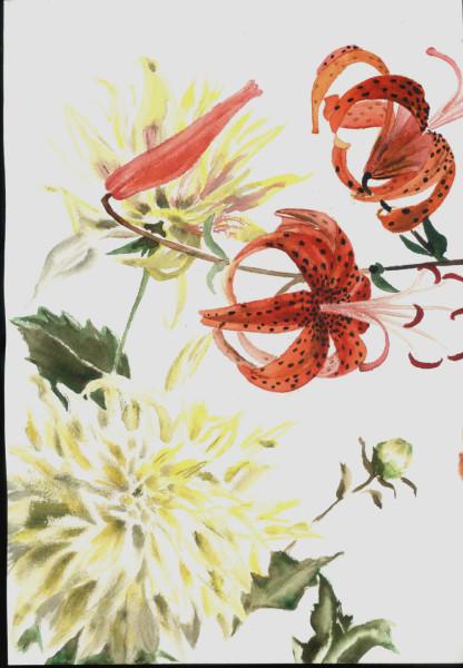 два рисунка лилии и георгины 1