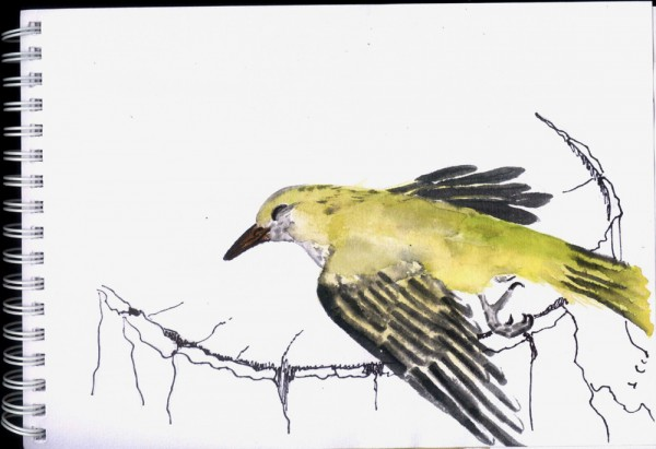 неизвестная птица 1