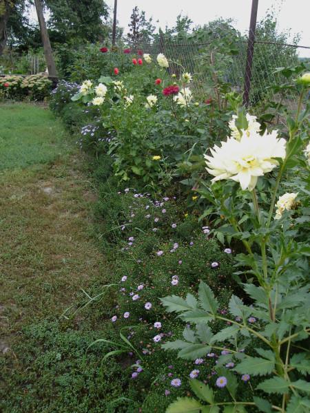 вдоль правой границы сада