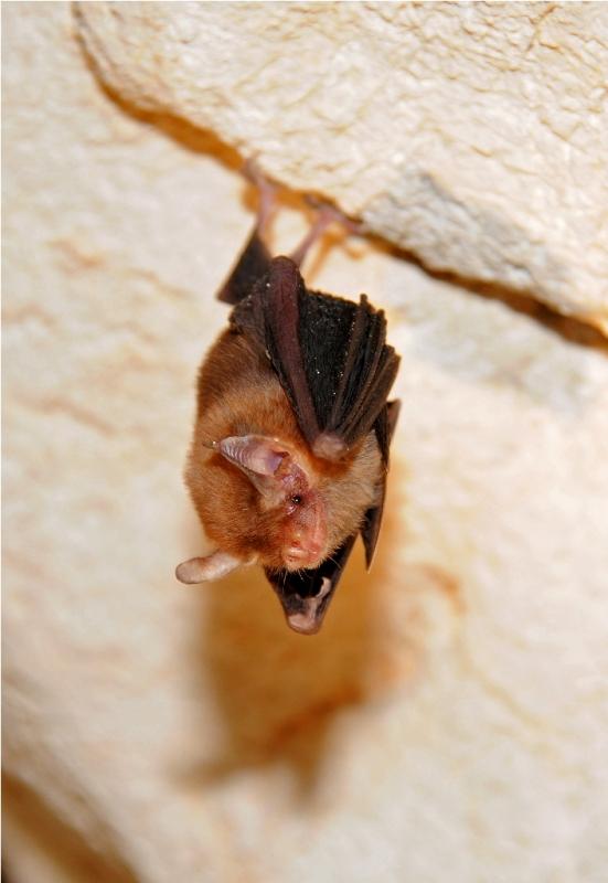 Самое маленькое животное в мире: 5l5 — LiveJournal  Самое Маленькое Животное в Мире