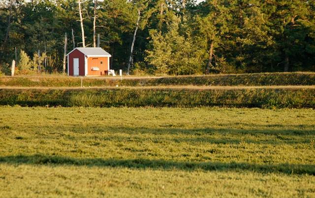 Cranberry Field © Yuri Lev