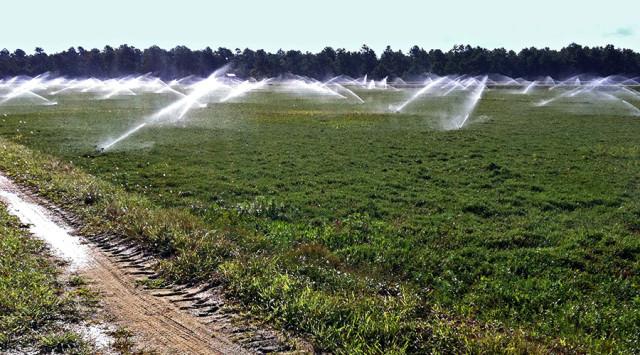 Cranberry Field. Irrigation ©Yuri Lev