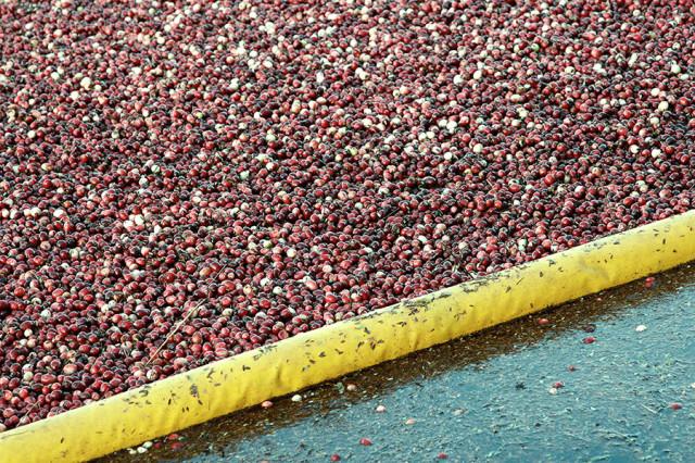Cranberry  ©Yuri Lev