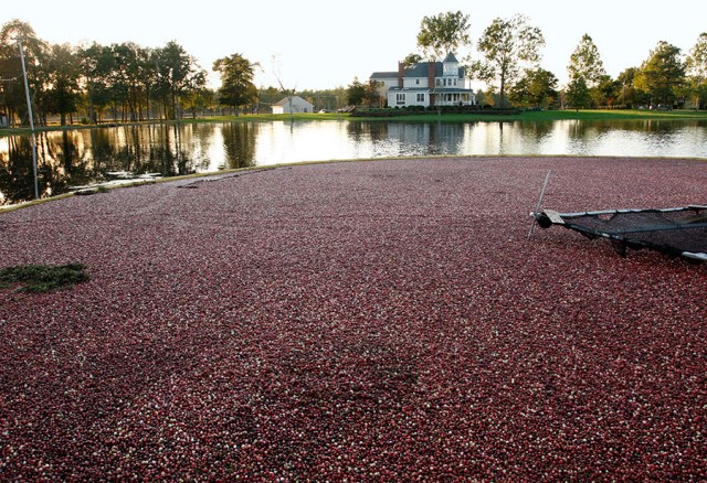Pine Island Cranberry Company Main Office ©Yuri Lev