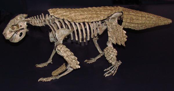 Simosuchus_clarki,_ROM