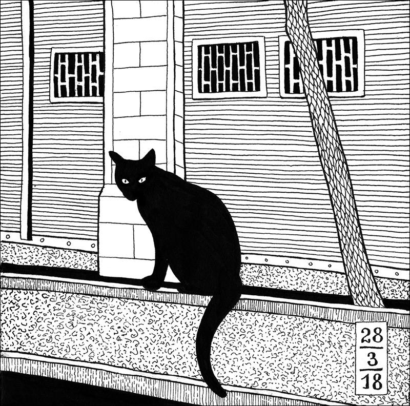 cat_bw.jpg
