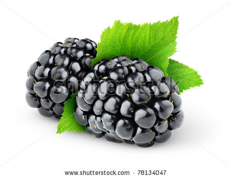 stock-photo-two-blackberries-isolated-on-white-78134047