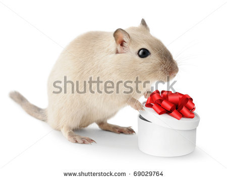 stock-photo-cute-little-gerbil-with-open-gift-box-isolated-on-white-background-69029764