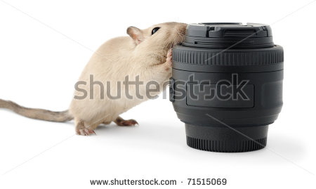 stock-photo-little-mouse-gnawing-a-photo-lens-isolated-on-white-71515069