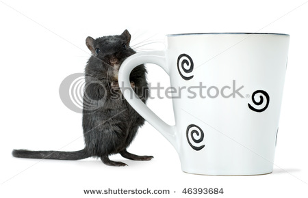 stock-photo-gerbil-standing-with-a-cup-46393684