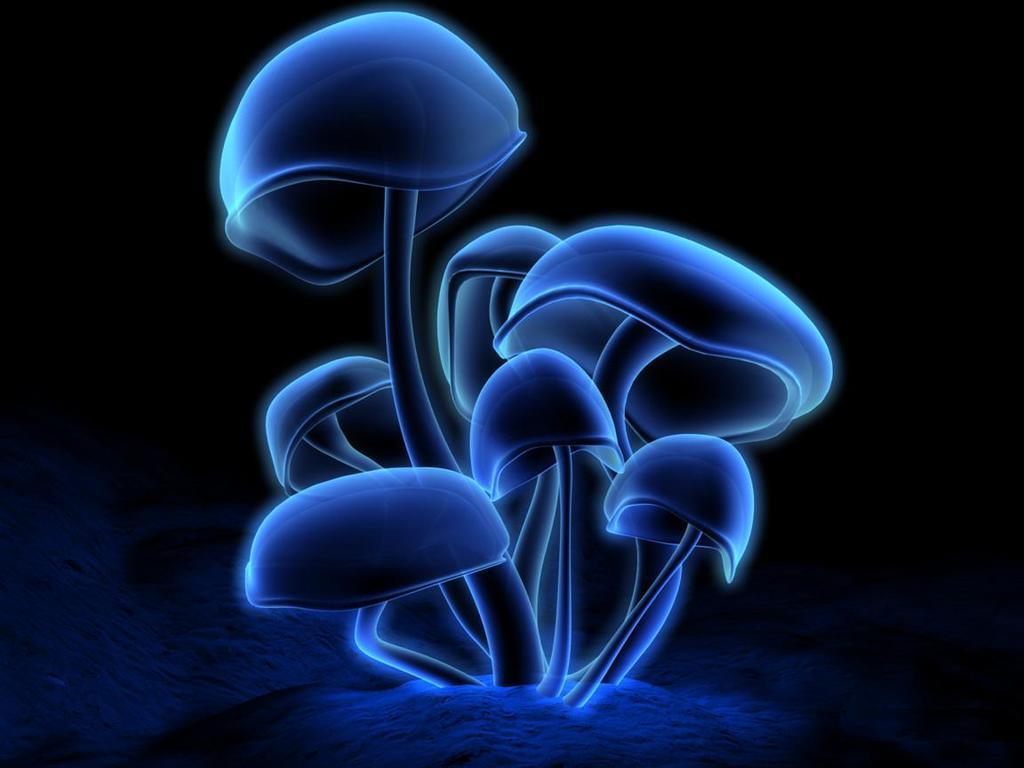 mushroom-blue-light-pattern-2