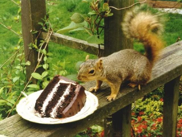chocoladeeekhoorn