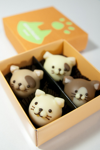 chocolate-cat-bon-bon