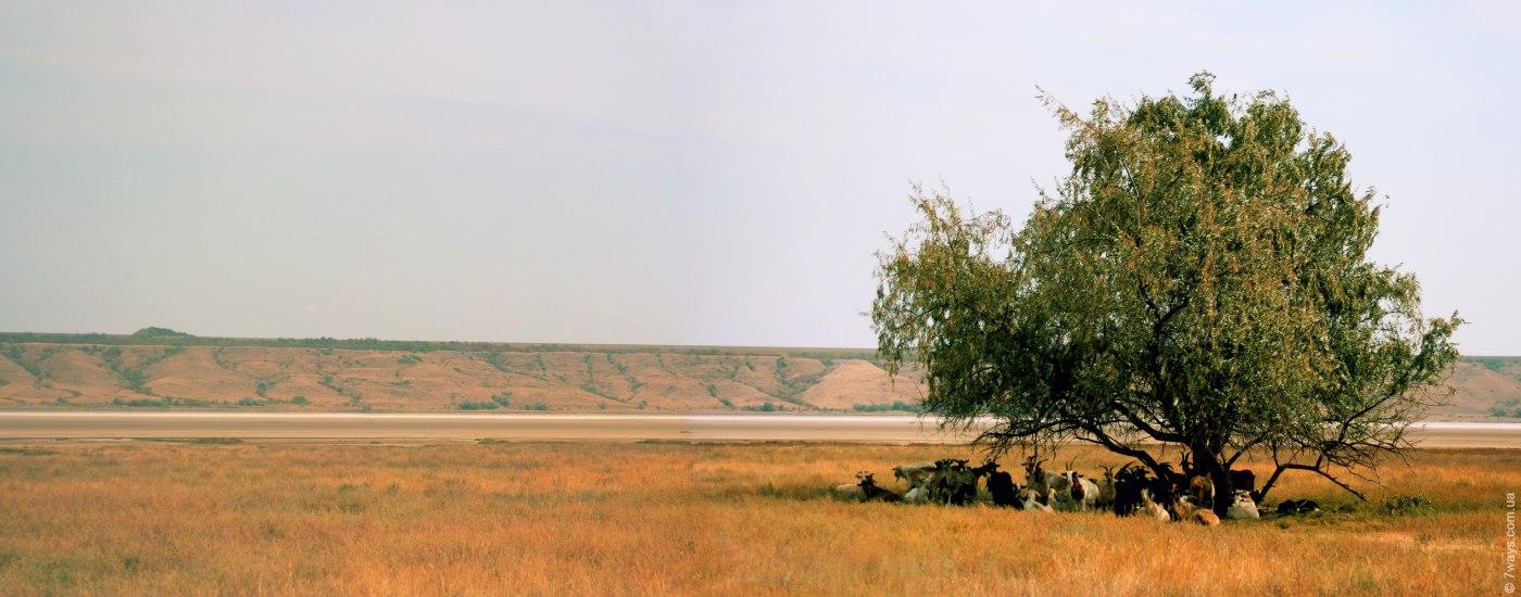 Panorama43