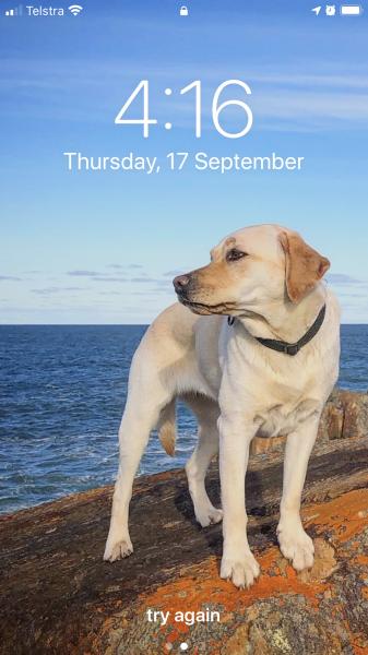 День, когда нас стало ещё больше Австралия