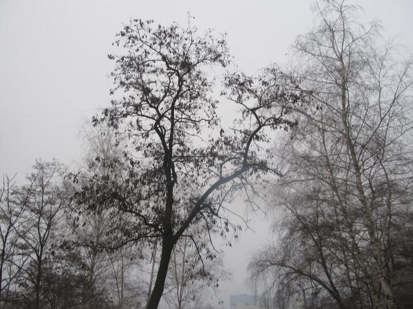 сережки и туман