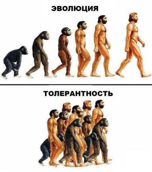 эволюция-толерантность