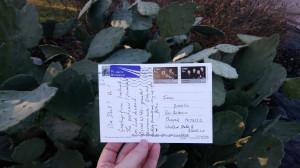 postcard and cactus.jpg