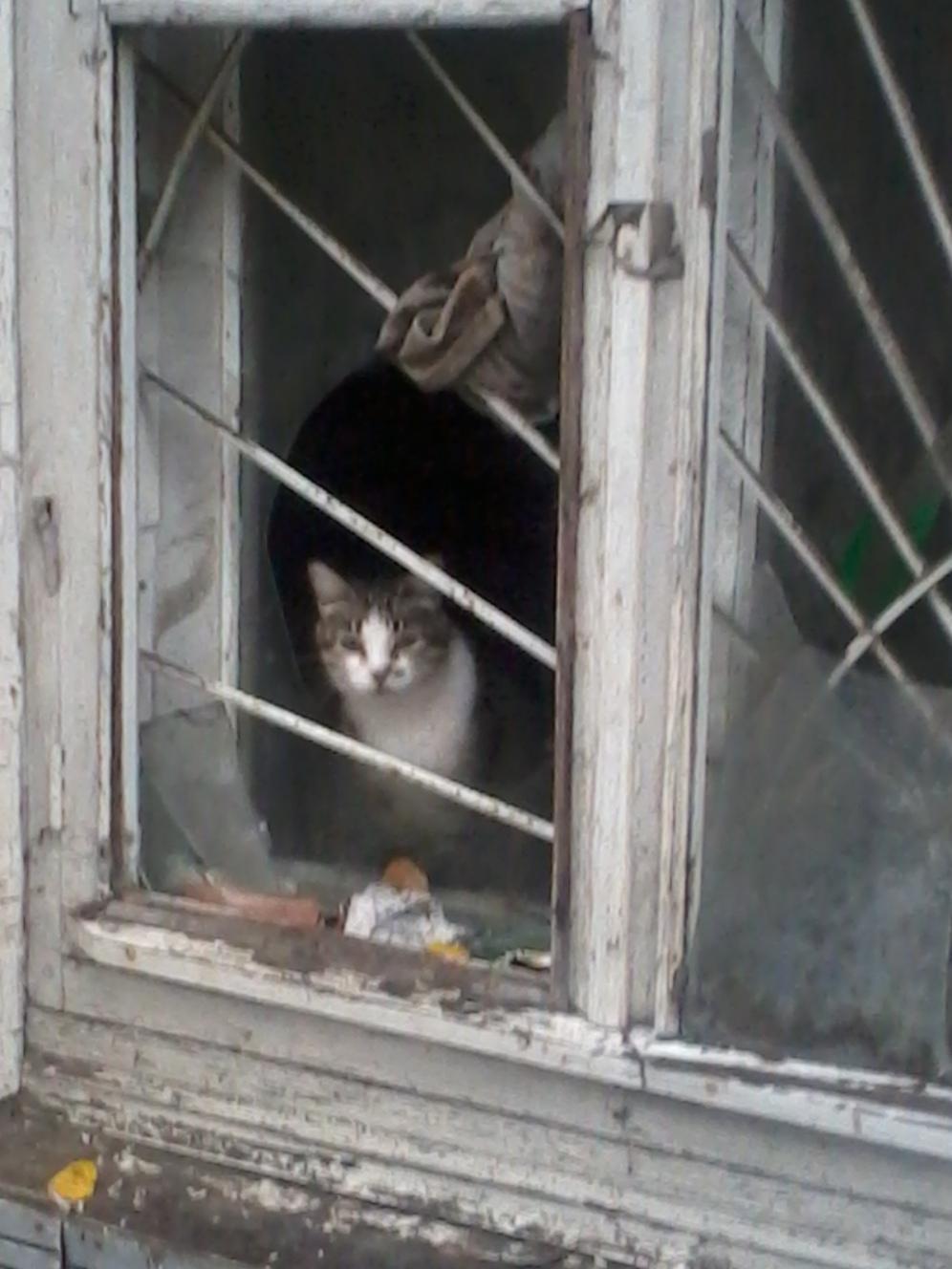 Кот_2