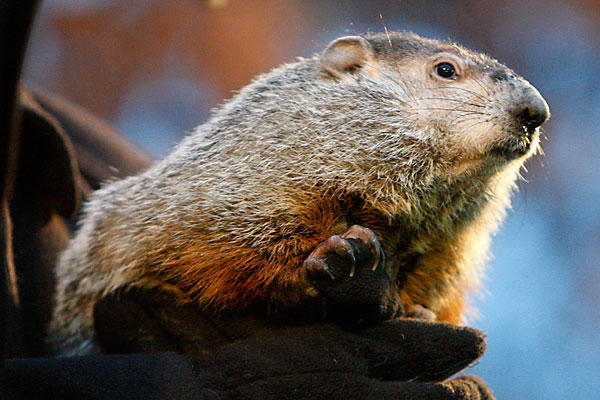 0202-aphil-Groundhog-Day-600_full_600