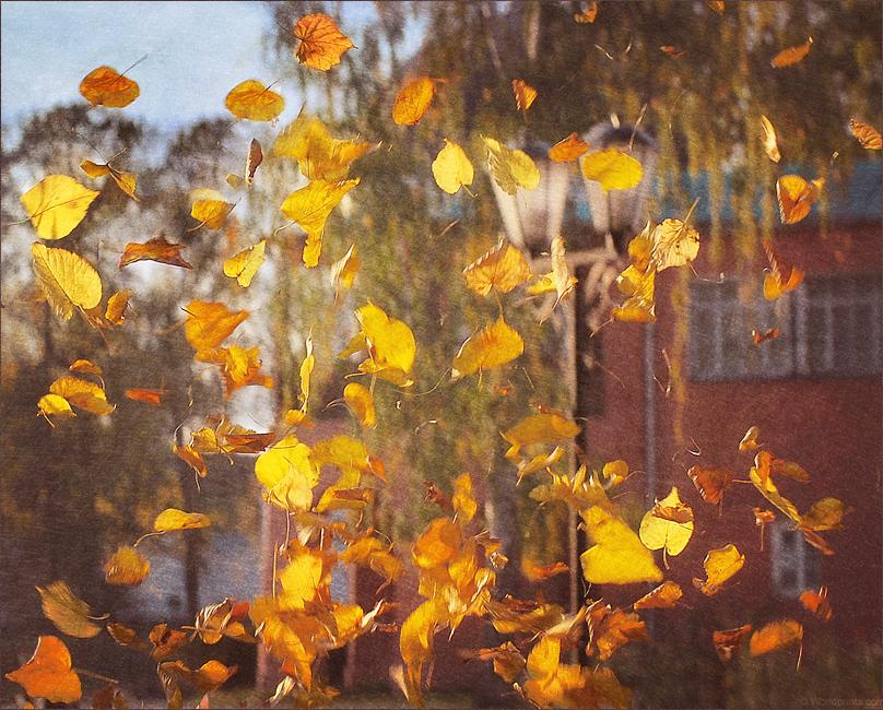 Открытка песня листья желтые медленно падают в нашем старом забытом саду