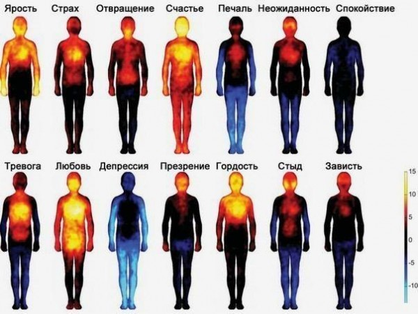 где чувства живут в теле