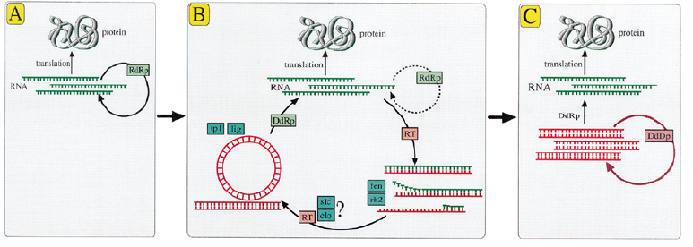 origin of DNA replication-1