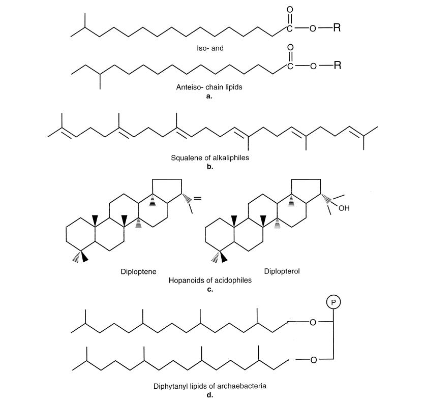 procaryote_lipids