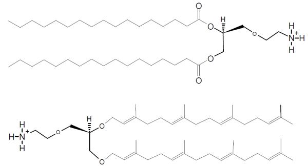 procaryote_lipids_major