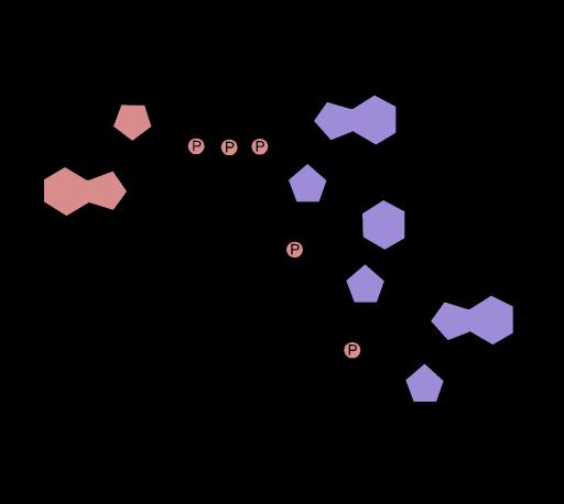 5'_cap_structure
