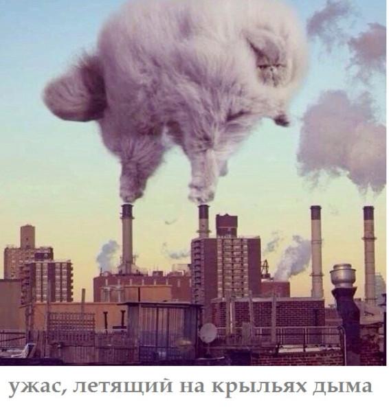 кот дым