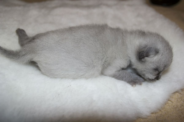 Черничка спит