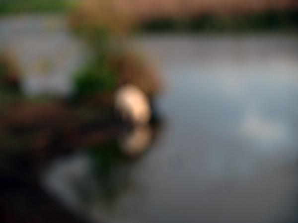 hula vodopoy P3232914