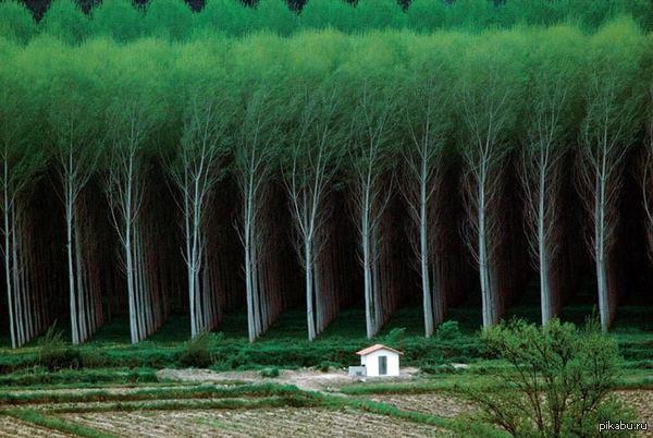 Искусственные леса.