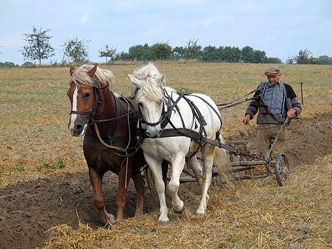 Примитивное земледелие. Без удобрений урожайность минимальна и почти весь урожай остается в хозяйстве фермера.