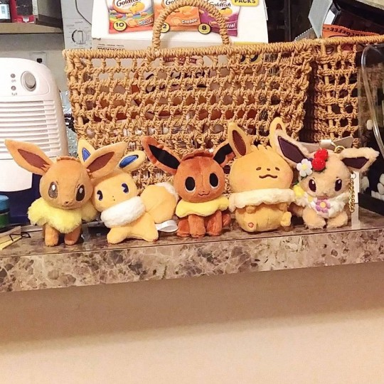 My plush eevees! From left to right, I Love Eievui, Mix Au Lait, Pokemon Time, Yurutto, and 2019 Easter! (Please god tell me this image posted correctly.)